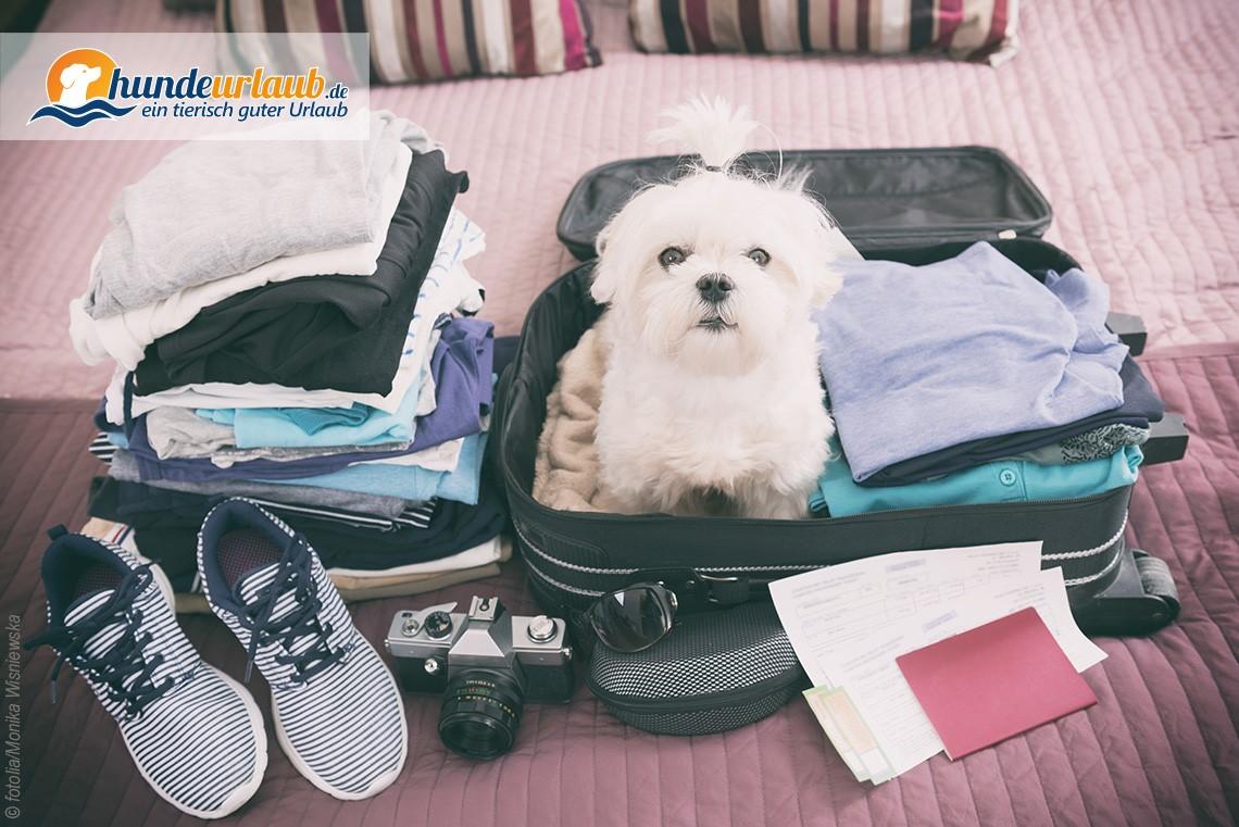 Urlaub mit Hund - Die wichtigsten Tipps inkl. Reisecheckliste zum ...