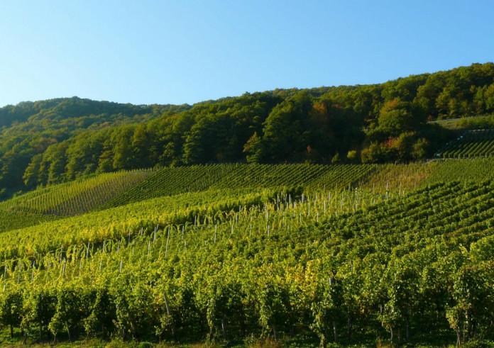 Mosel Urlaub Wandern Weinhänge