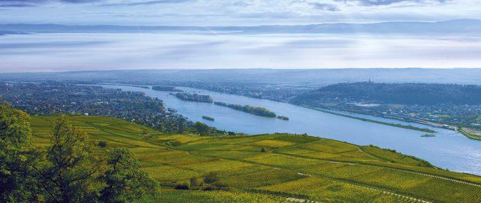 Weinberge Rüdesheim am Rhein