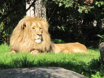 Top 10 Leipzig: Zoo