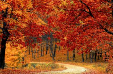 Urlaub im September: Kurztrip Herbst
