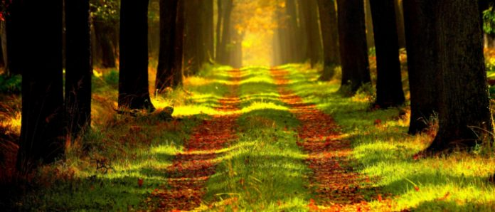 grunewald berlin