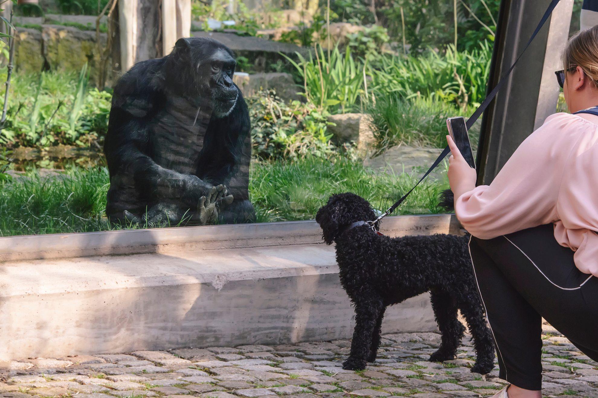 zoo halle saale